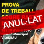 Viladrau ANUL·LAT Prova de treball sobre rastre de senglar 2020