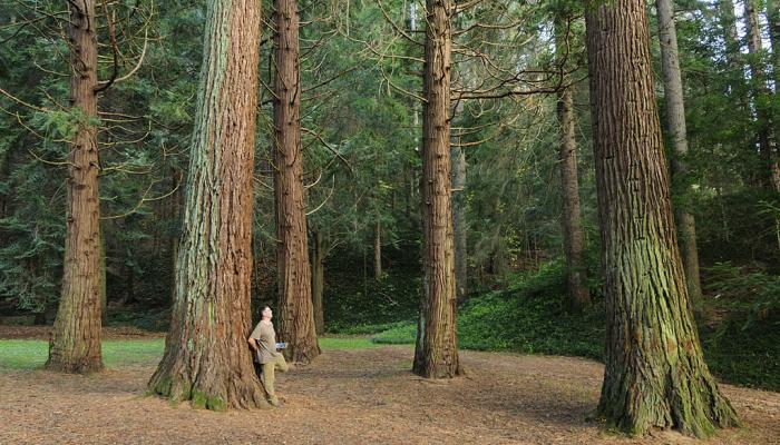 Itineraris i rutes. Arboretum Masjoan. Viladrau-Espinelves.
