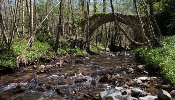 Pont de Can Pau Moliner 2