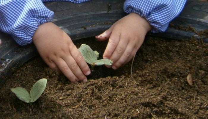 mans amb planta