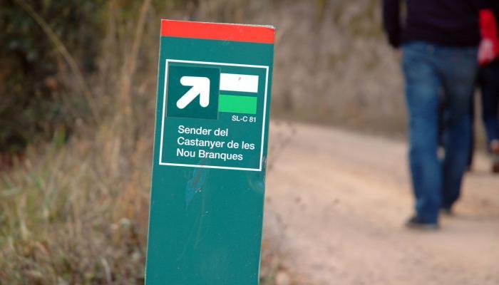 Viladrau, itineraris i rutes. Castanyer de les 9 branques